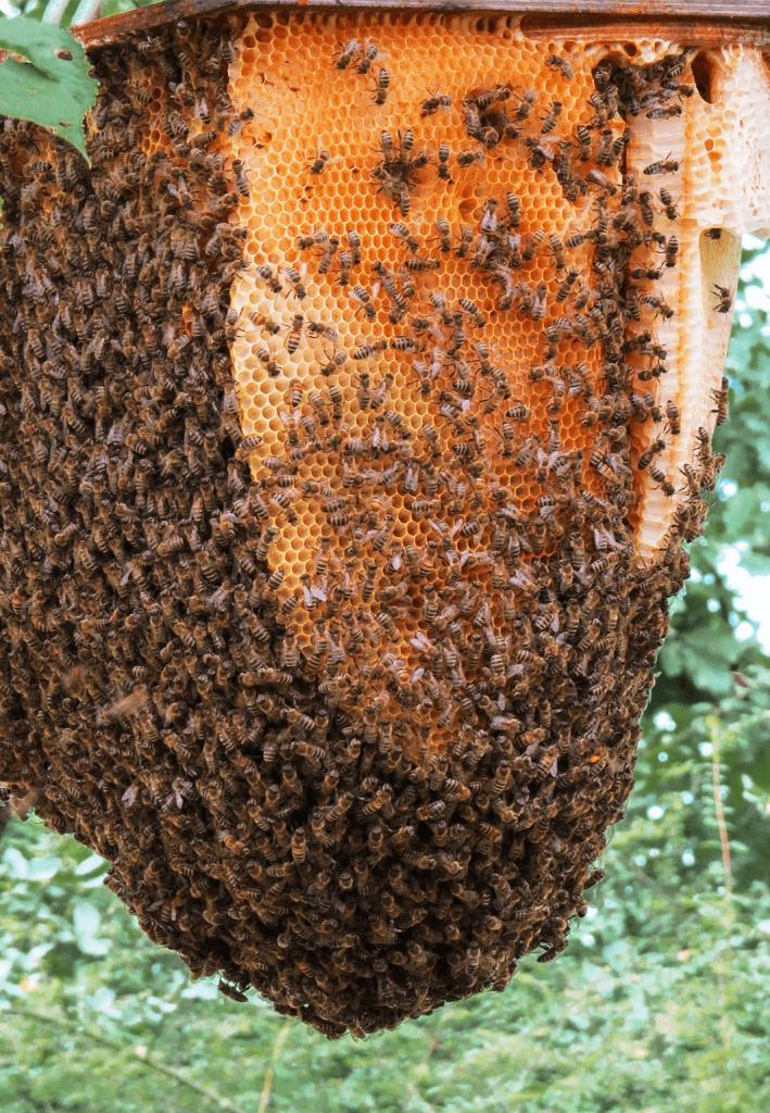 Bienennest Imkerverein Essen Kettwig