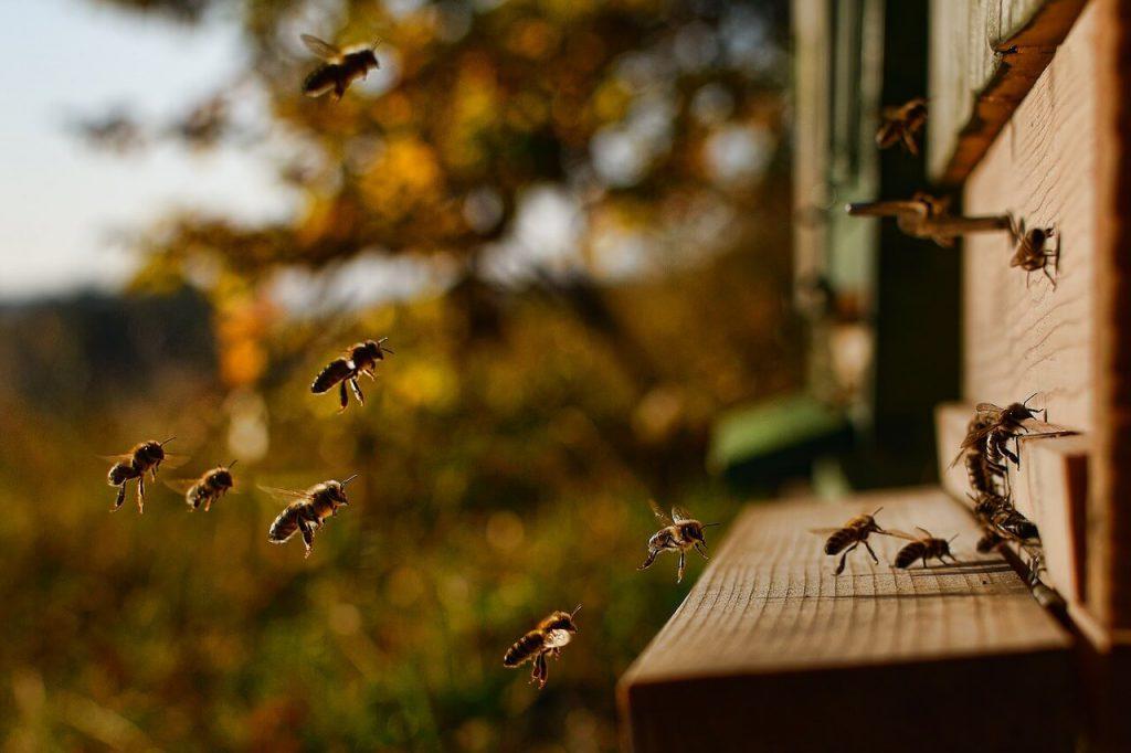 Bienenstock Imkerverein Kettwig Essen